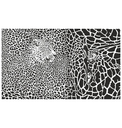 Background with leopard and giraffe vector image vector image