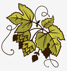 beer hop branch with leaves graphic vector image