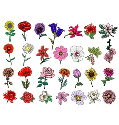 Big set of flowers vector
