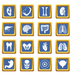 Human organs icons set blue vector