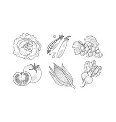 set of fresh vegetables and fruits natural vector image