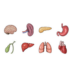 human organs icons in set collection for design vector image