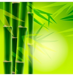 Bamboo background with copy space vector