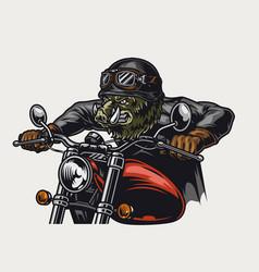 Cruel wild boar head moto rider vector