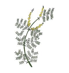 Drawing gum arabic flower vector