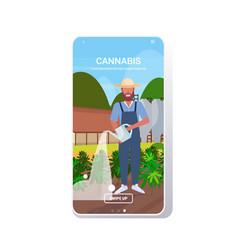 Farmer watering cannabis industrial hemp vector