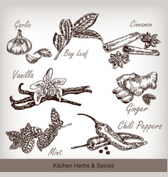 Kitchen herbs and spices set vector