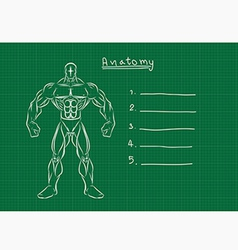 anatomy vector image