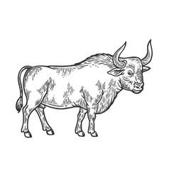 Bull rural farm animal engraving vector