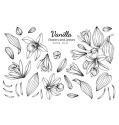 Collection set of vanilla flower and leaves vector