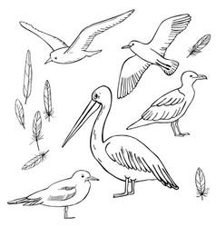 Gulls and pelicans sketch vector