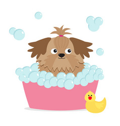 little glamour tan shih tzu dog taking a bubble vector image