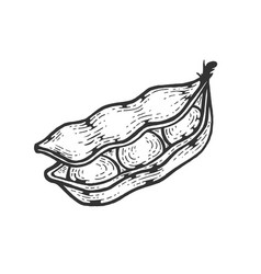 soybean sketch engraving vector image