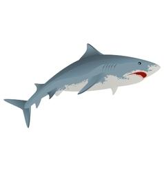 Big white shark marine predator vector image vector image