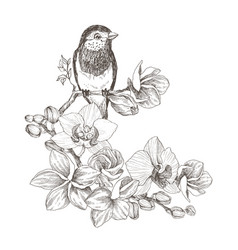 bird hand drawn in vintage style with tropical vector image