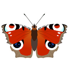 butterfly peacock vector image
