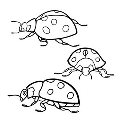 coloring book ladybugs set vector image