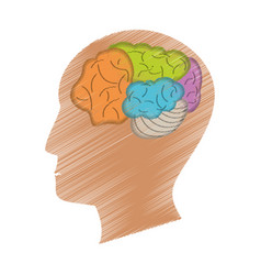 drawing profile head brain vector image