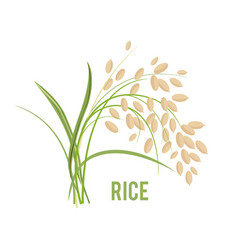 grains in the flat style vector image