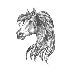 Profile portrait of purebred andalusian mare icon vector