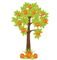 Aple tree vector