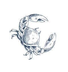 Crab crustacean sea creature sketch style poster vector