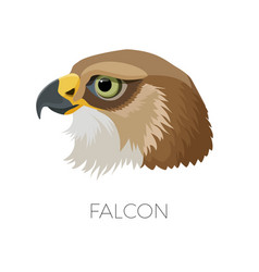 Falcon gorgeous profile with sharp beak and green vector