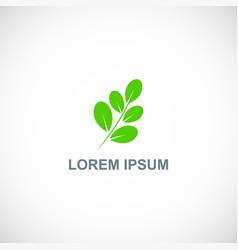 leaf organic botany logo vector image