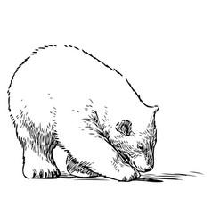 Sketch walking polar bear cub vector