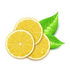 lemon slice vector image vector image
