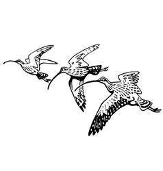 curlew sandpiper vector image vector image