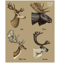 Reindeer moose eurasian elk doe roe deer and vector