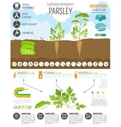 Gardening work farming infographic Parsley Graphic vector