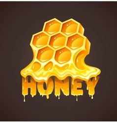 Honey in honeycombs vector