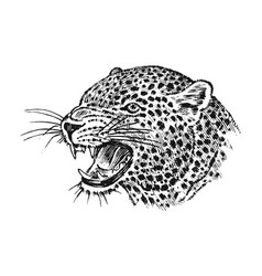 Japanese wild leopard portrait asian cat profile vector
