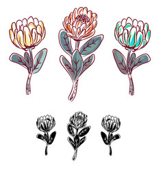 Protea flower isolated object vector