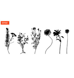Set silhouettes of wild flowers vector