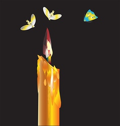 fly around a candle vector image