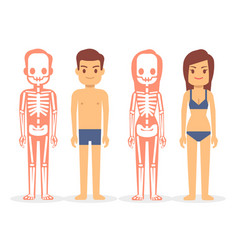Man and woman male and female skeletons isolated vector
