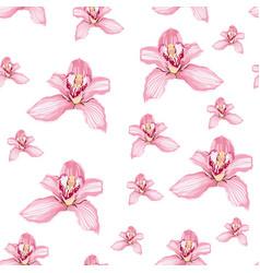 pink purple tender orchid phalaenopsis floral vector image