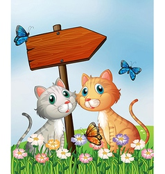 Two cats in front of an empty wooden arrow board vector