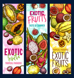 Exotic fruits tropical fruit sketch banners vector