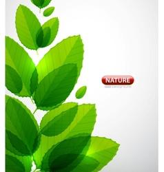 Green leaf summer tree vector image