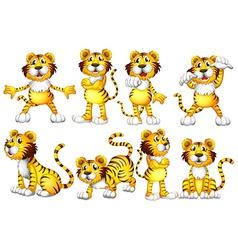 Tiger set vector image vector image