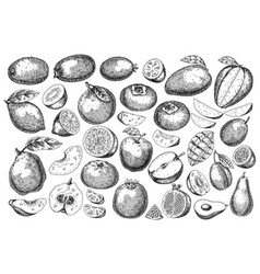 hand drawn sketch style fresh fruit vector image vector image