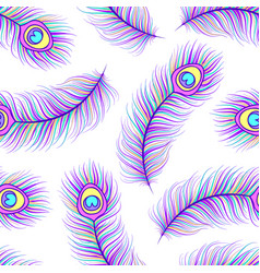peacock feathers on white background vector image vector image