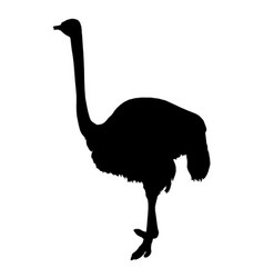 african ostrich standing of black silhouette on vector image