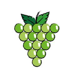 grape fruit food vector image