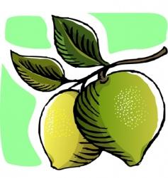 guava vector image