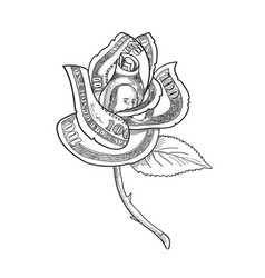 Rose flower with money or us one hundred dollar vector